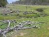 Goldfields Pipeline
