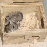 NHM in nest box 2