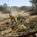 Sugarloaf Pipeline Toolangi Forest 03022009-14 Compressed